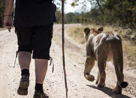 Walk With Lions Victoria Falls