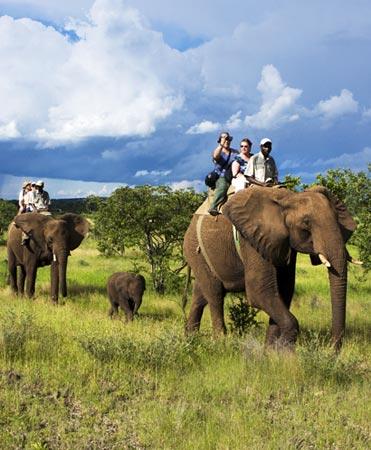 Elephant Back Safari Victoria Falls Activity