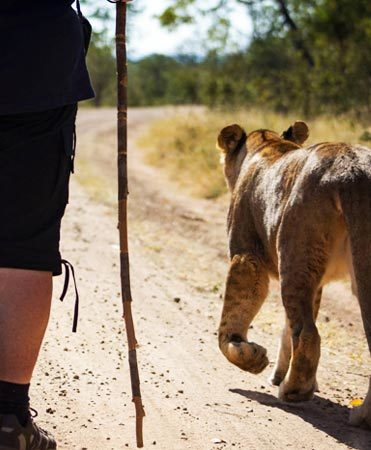 Walk With Lions Victoria Falls