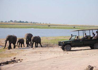 Chobe Day Trip