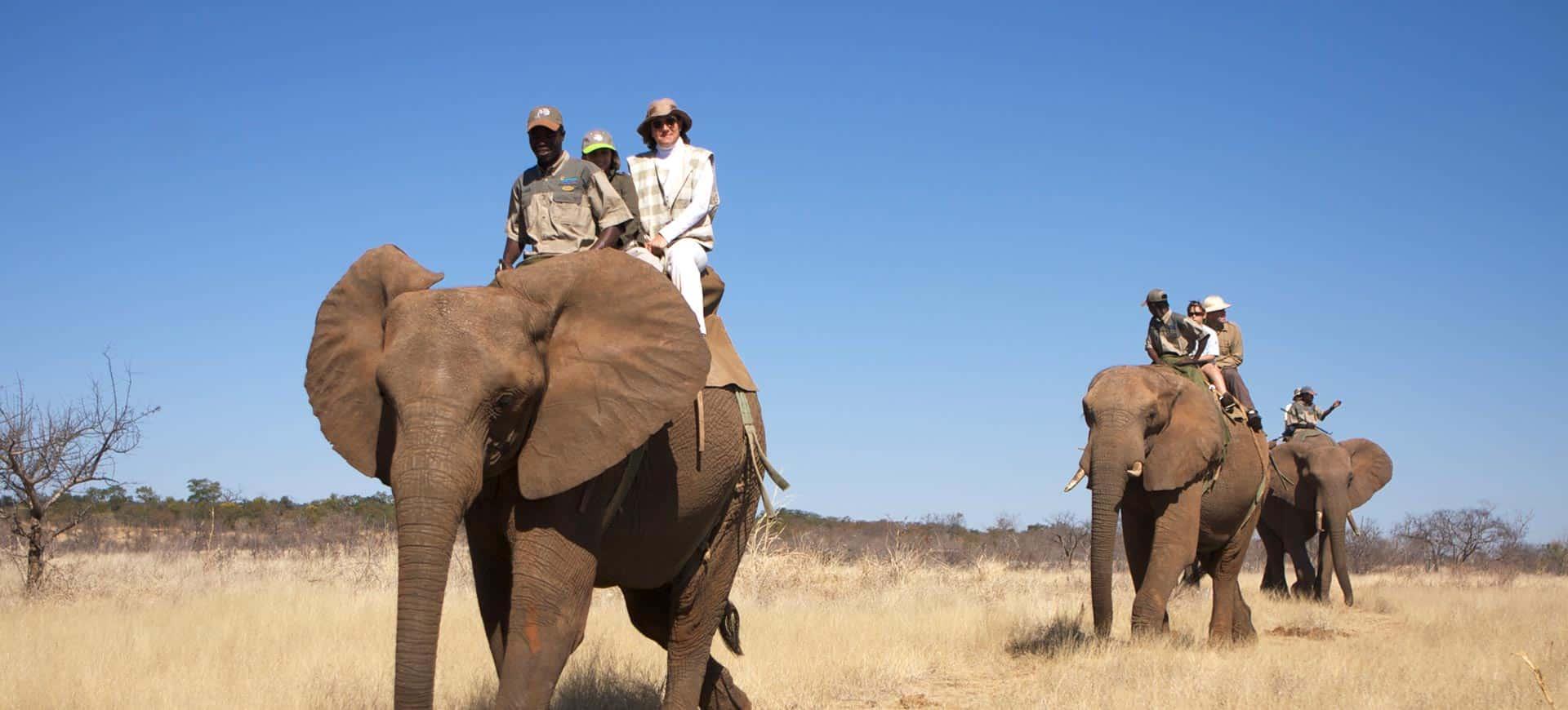 Elephant Back Safari Victoria Falls