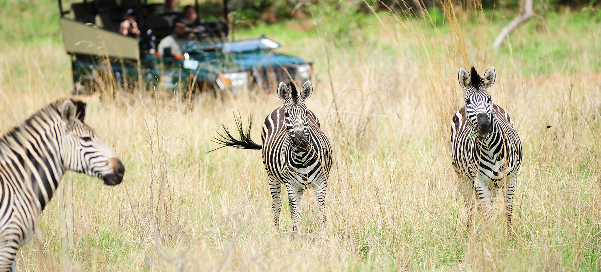 Game Drive Safari Victoria Falls