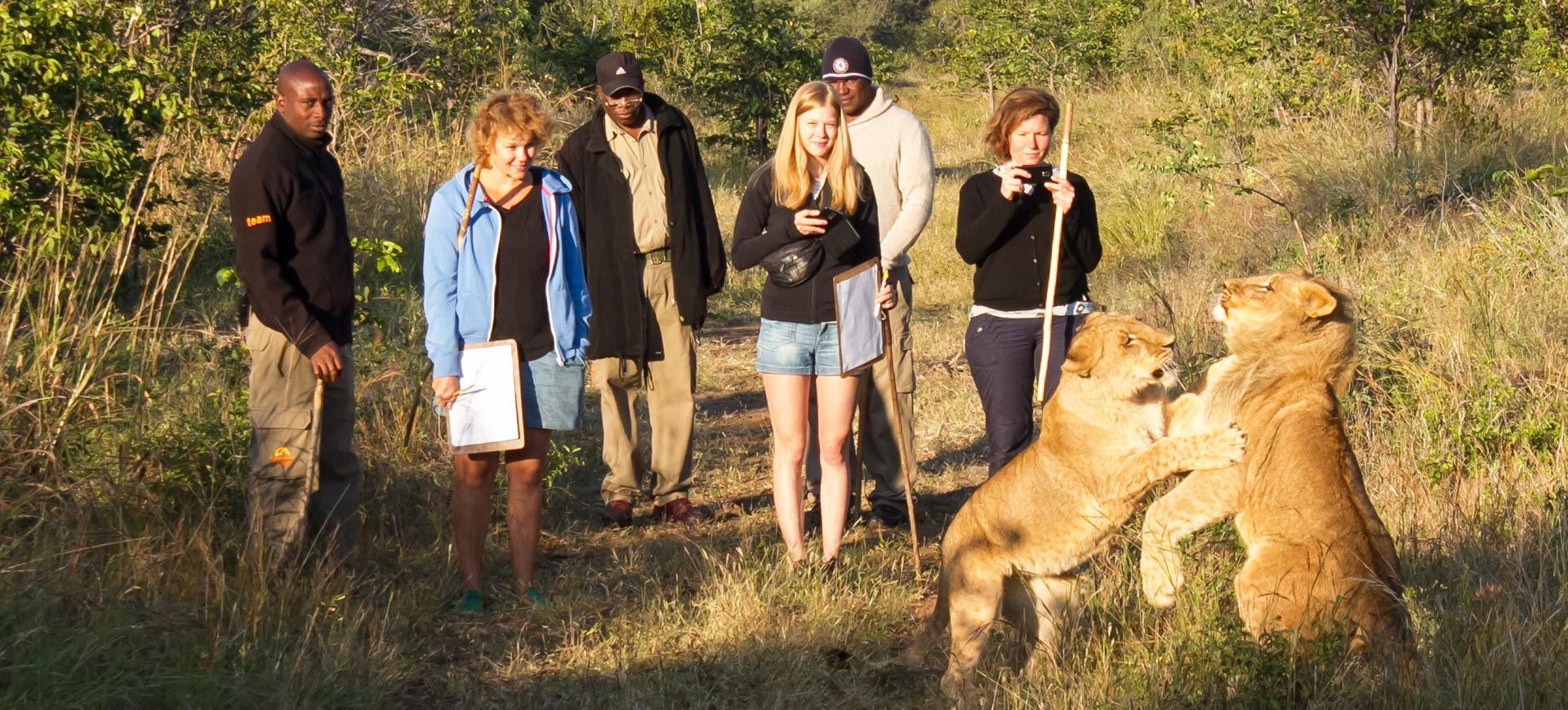 Lion Walks